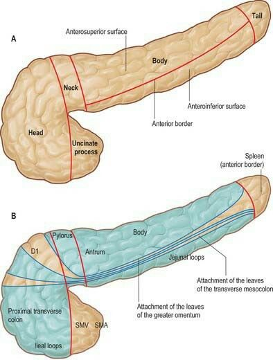 anatomy for the generic surgical sciences ebooks