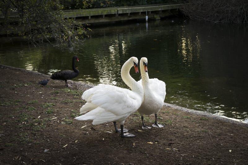 black swan green epub download