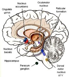 neuroanatomy draw it to know it free ebook