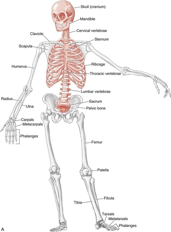 structure and function of the musculoskeletal system ebook